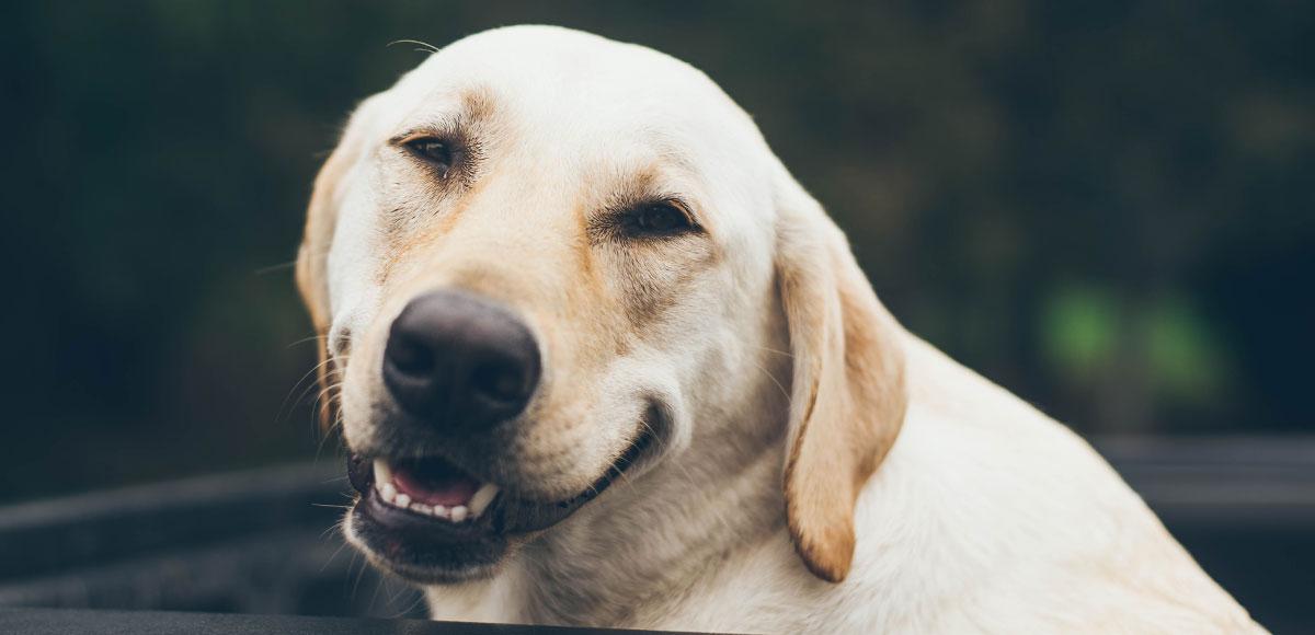Jak vybrat cvičák pro psa