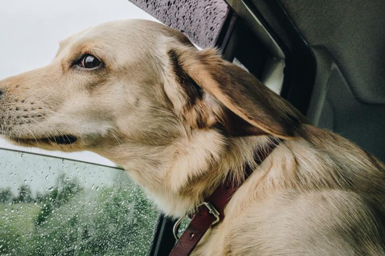 Travel Dog - Slávek Král