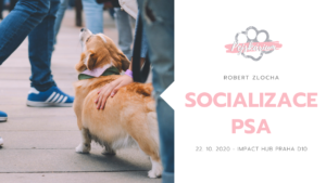Socializace psa